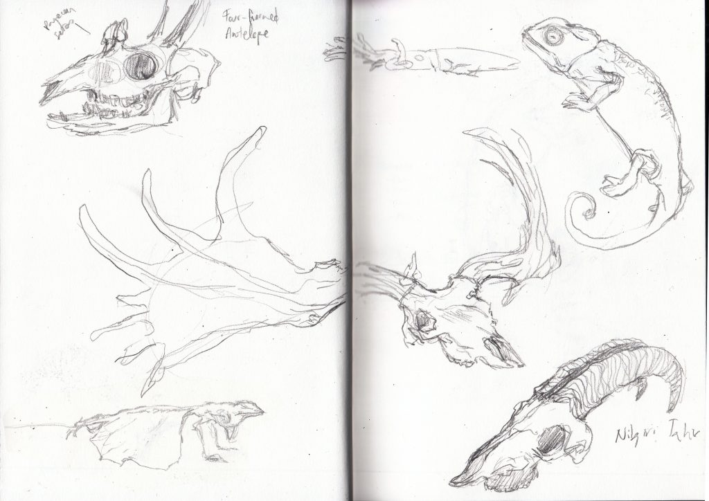 Grant Museum of Zoology sketch