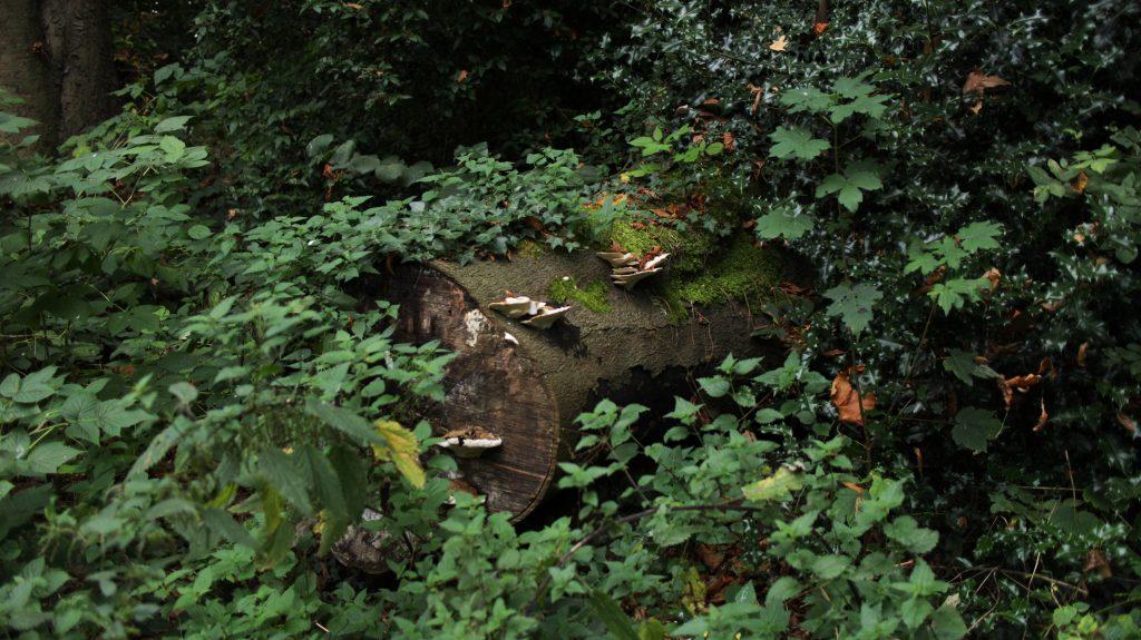 Gunnersbury park trunk mushroom autumn fall
